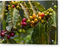 Colorful Coffee Beans Acrylic Print by Craig Lapsley