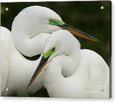 Acrylic Print featuring the photograph Colorful Couple by Myrna Bradshaw