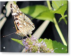 Colorful Critter 1 Acrylic Print by Frank Nicolato