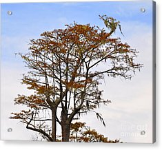 Colorful Cypress Acrylic Print by Al Powell Photography USA