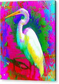Colorful Egret Acrylic Print by Doris Wood