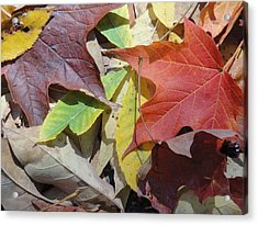 Colorful Fall Leaves Acrylic Print by Kathy Lyon-Smith