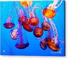 Colorful Jellies Acrylic Print