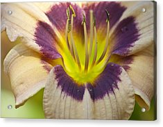 Colorful Lily Acrylic Print
