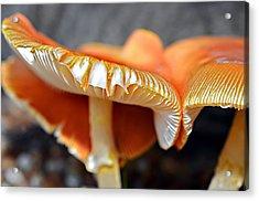 Colorful Mushrooms Acrylic Print by Susan Leggett