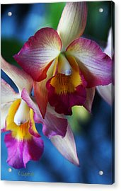 Acrylic Print featuring the photograph Colorful Orchids by Kerri Ligatich
