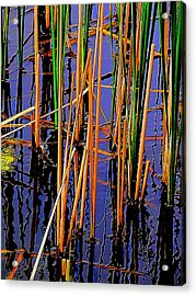 Colorful Reeds Acrylic Print by Beth Akerman