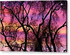 Colorful Silhouetted Trees 21 Acrylic Print by James BO  Insogna