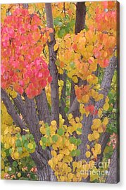 Acrylic Print featuring the photograph Colorful by Tina Marie