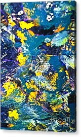 Colorful Tropical Fish Acrylic Print by Elena Elisseeva