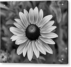 Acrylic Print featuring the photograph Colorless by Brian Hughes
