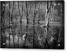 Colorless Serenity Acrylic Print by Greg Palmer