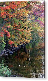 Colors Acrylic Print by Adrian LaRoque
