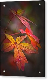 Colors Acrylic Print by Karol Livote