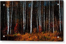 Colors Of Fall Acrylic Print by Jenny Rainbow