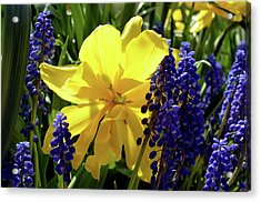 Acrylic Print featuring the photograph Colors Of Spring by Pravine Chester