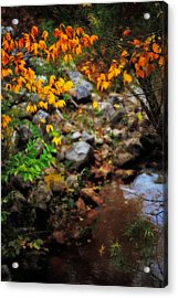 Colors On The Creek Acrylic Print by Toni Hopper