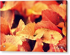 Colour Me Red Acrylic Print by Vishakha Bhagat
