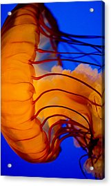 Colours Of The Jelly Fish 3 Acrylic Print by Naman Imagery