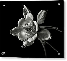 Acrylic Print featuring the photograph Columbine In Black And White by Endre Balogh