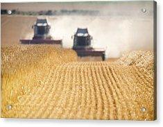 Combines Harvesting Field, North Acrylic Print by John Short