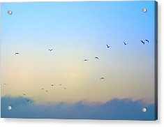 Come Fly With Me Acrylic Print by Bill Cannon