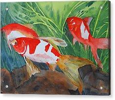 Comet Goldfish Acrylic Print