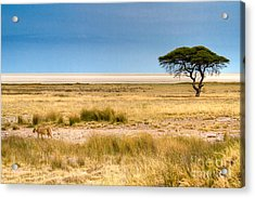 Acrylic Print featuring the photograph Coming Home by Juergen Klust