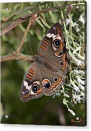Common Buckeye Butterfly Din182 Acrylic Print
