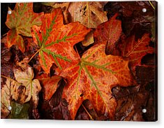Complementary Contrast Leaves Acrylic Print by Matthew Green