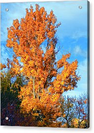 Complimentary Colors Acrylic Print by Michael Putnam
