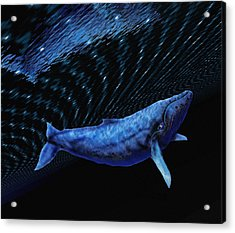 Computer Artwork Of A Humpback Whale Acrylic Print by Victor Habbick Visions