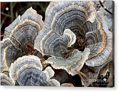 Concentric Acrylic Print