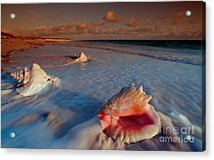 Conch Shell On Beach Acrylic Print by Novastock and Photo Researchers