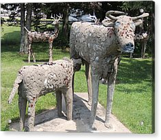 Concrete Calf And Cow Acrylic Print by Peg Toliver