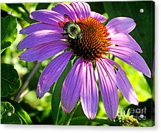 Acrylic Print featuring the photograph Cone Bee by Nava Thompson