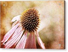 Cone Flower Acrylic Print