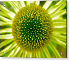 Cone Of The Cone In Lime Acrylic Print by Randy Rosenberger