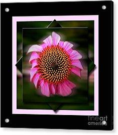 Coneflower Geometric Acrylic Print by Sue Stefanowicz