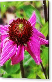 Acrylic Print featuring the photograph Coneflower by Judi Bagwell