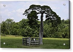 Confederate Grave Of Lafayette Meeks Appomattox Virginia Acrylic Print by Teresa Mucha