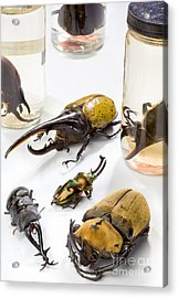 Confiscated Beetles Acrylic Print by Science Source