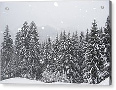Coniferous Forest In Winter, Alps Acrylic Print by Konrad Wothe