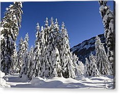 Coniferous Forest In Winter Acrylic Print by Konrad Wothe