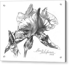 Conte Pencil Sketch Of Iris Acrylic Print