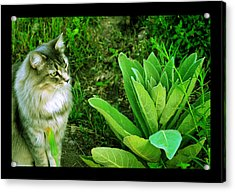 Acrylic Print featuring the photograph Contemplating The Nature Of Mullein by Susanne Still