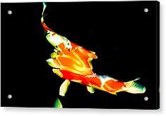 Contemporary Koi Photo Painting Acrylic Print