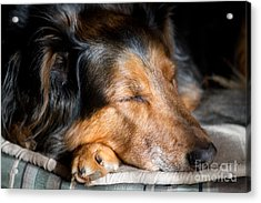 Contentment Acrylic Print
