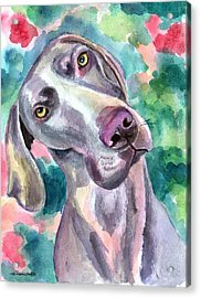Cookie - Weimaraner Dog Acrylic Print