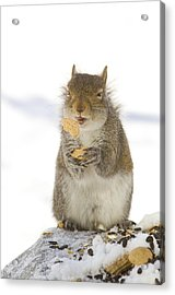 Cookie Squirrel Acrylic Print